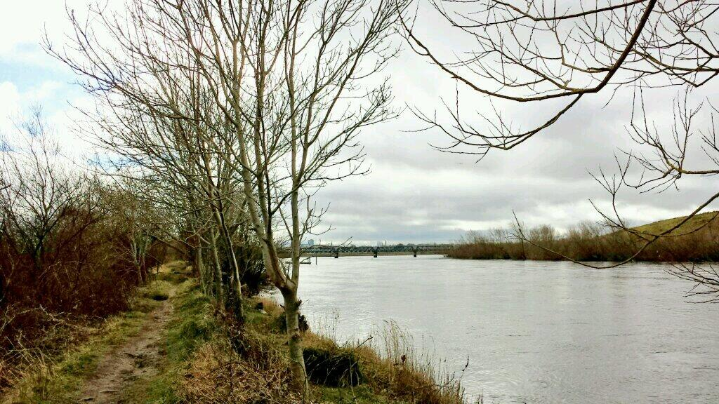 Walk Along the Shannon at Corbally – 27 Nov 2012