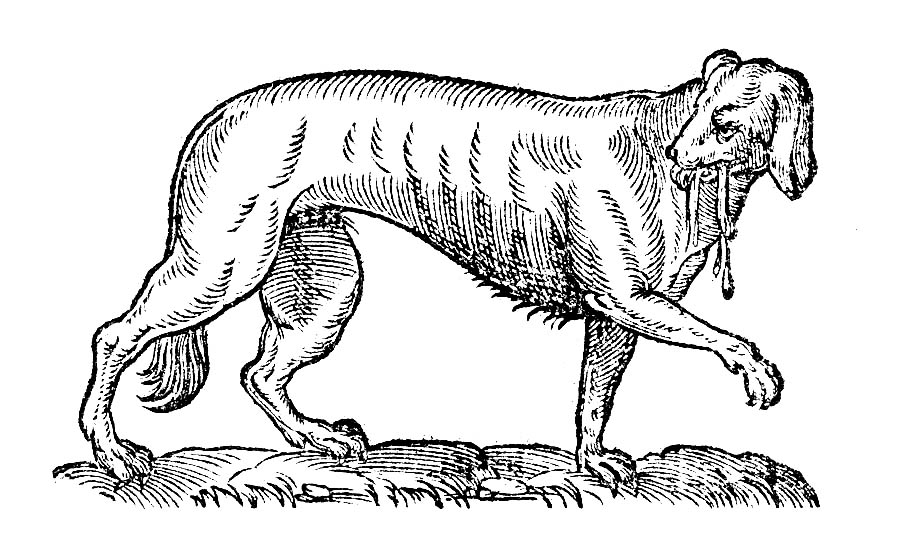 Rabies and Sheep in the City, 1884